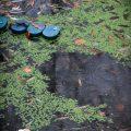 verlaten ruw rauw urbex vervallen www.ruwmantisch.nl ruwmantisch fotografie fotosessie fotoshoot zwembad algen regen