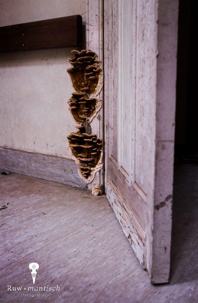 verlaten ruw rauw urbex vervallen www.ruwmantisch.nl ruwmantisch portret portretten portretfoto's fotografie fotosessie fotoshoot roest ziekenhuis sanatorium deuren gang schimmel paddenstoelen elvenbankjes